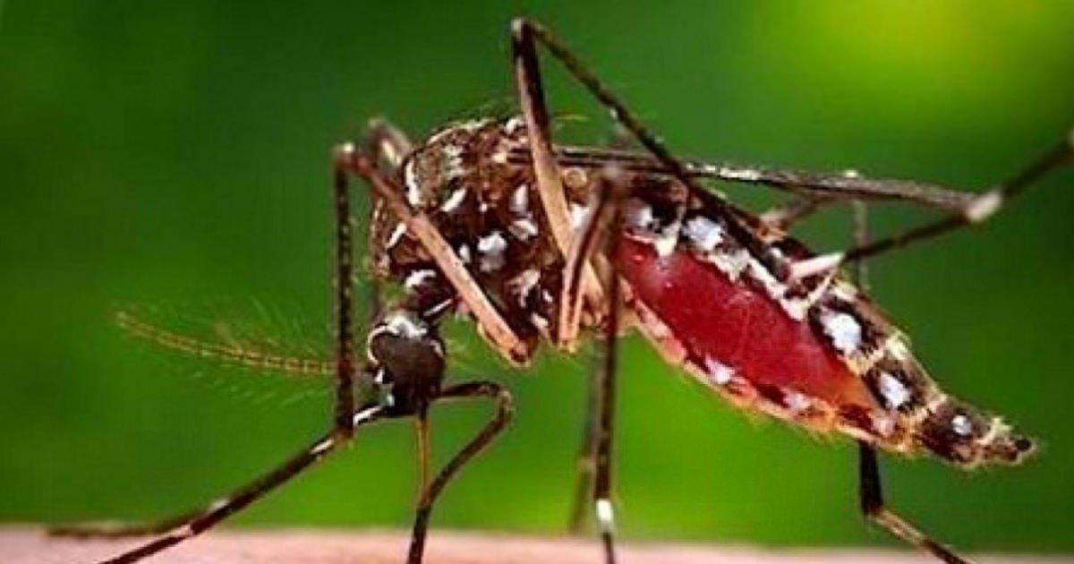 代々木公園でデング熱感染なぜ?媒介する蚊を退治する「蚊取りボトル」作り方まとめ