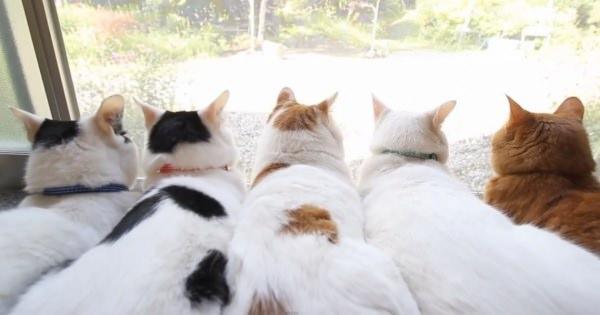 しっぽがたまらなく良くて癒される♪窓辺に集まり外を見続ける5匹の猫