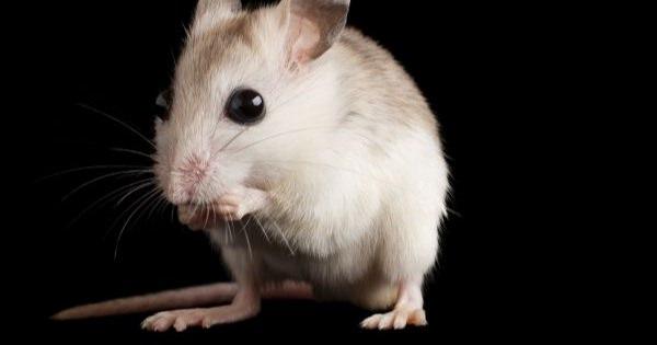 面白い検証が行われています。実験動物、実は男性の匂いでストレスを感じていた!!