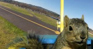 こっこれはスゴい!「リスがラジコン飛行機を盗んで大空に舞う瞬間」笑