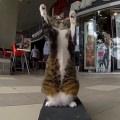 天才猫現る!?スケボーに乗り、自由自在に移動する「Didga」(ディッガ)ちゃん