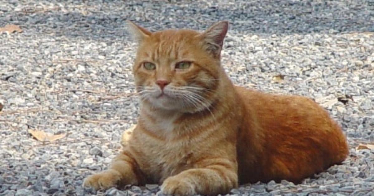 """野生猫だったマイケルから学ぶ""""小笠原流"""" 凶暴な猫を人懐っこくする方法"""