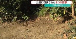 ゆっ許せない・・!!!にゃんこの両足首を切断する輩が東京都内に潜んでいる 猫は20匹以上やられているみたいだ