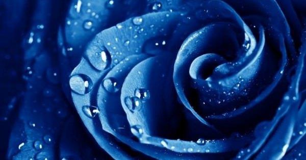 あなたはいくつ知ってましたか?色で変わるバラの花言葉