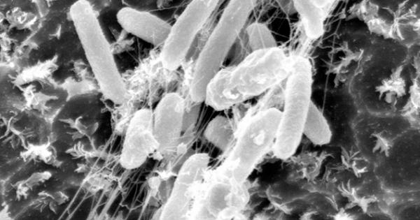 <これは~多分、朗報なのだろう~!>  ペットボトルを食べる細菌発見 「分解できぬ」定説覆す