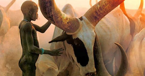 自然とともに生きる姿が美しすぎる・・・とため息!! ディンカ族 ー スーダンのナイル川流域に住む民族