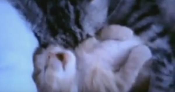 うなされてるネコの動画6本!どんな夢を見ているの?面白すぎ!