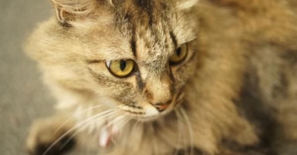 猫の感動する話 泣ける話 実話【動物】②