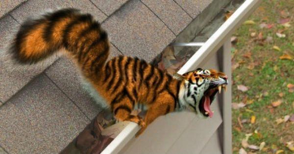 あれ!こんな動物っていたっけ!顔とカラダがちょっと違う不思議な動物達!