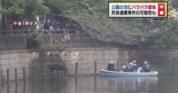 信じられない!静かな住宅街にある碑文谷公園でバラバラになったの遺体が発見される!