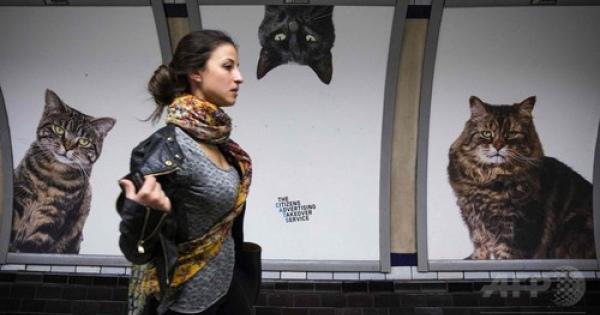 猫だらけのロンドンの地下鉄駅!家族を募集する猫達が乗っ取った!。