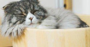 【ほぼネタ画像】犬 猫 鳥 ハムスターなど 話題の癒し画像10選!!【Twitter】