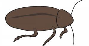 一般家庭のゴキブリ対策 効果的な駆除(退治)方法