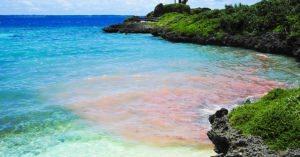 感動!奄美大島の海岸で、ピンクに染まるサンゴの産卵が始まっている!