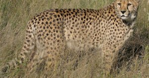 地球上で最速の動物!世界一速い動物は?