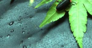 [風物詩] こんどはヘイケボタル 横浜ホタル 2016