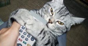 抱きつく猫達!寂しいニョ!落ち着くニョ!と言っていそうな顔が愛らしい!