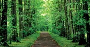 心理テスト!森の中で「蜂」や「蝶」の大群が襲ってきた夢を見た時の心理は!