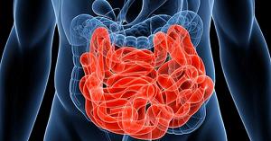 <・・・腸があなたの人生を決める?> 脳1割、腸9割で人生はもっと上手くいく!!腸は第2の脳どころではない腸が持つ10の優れた機能とは?