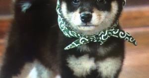 史上初!和風総本家の看板犬、18代目・豆助が「黒豆」に!?10~18代目の豆助の写真を並べてみた