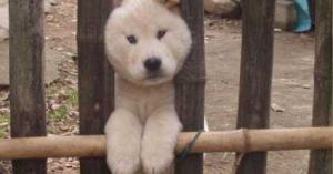 【犬】かわいいのだけどなぜか挟まってるワンちゃん