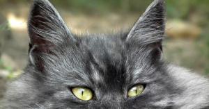 かわいい猫さん達の日常にひそむあるある集