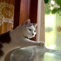 かわいらしい水飲み猫さん