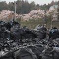 311前、新宿は2Bq/kg以下だった。福島原発爆発後の新宿は790Bq/ kg、更に増加中・・・東京電力原発事故、その恐るべき健康被害の全貌―Googleトレンドは嘘をつかない―
