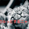 猫の感動する話 泣ける話 実話【動物】