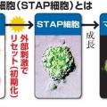 ハーバードのSTAP特許出願の一部譲渡(共有化)は、前進している明るい材料・・・?