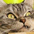 不満顔のネコたち!みんな何かに不満を持ってるようです。
