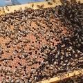 <・・・ミツバチが突然世界中から消え始めてる。その原因は?> 大量死ミツバチから農薬 農水省、ネオニコチノイド系含め「原因の可能性高い」