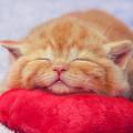 にゃんこブログを一気読み!猫ブログまとめを集めてみました☆