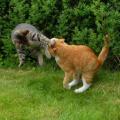 まるでバトル漫画かのような猫さんの戦闘シーン
