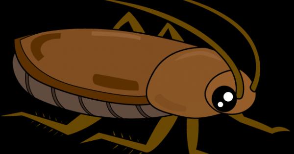 【トリハダ確定】ゴキブリの怖い話 / 恐怖体験談
