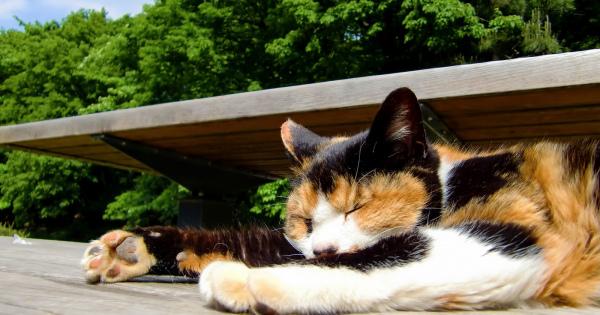 猫好きにもそうじゃない人も、とにかく癒されるネコスポット