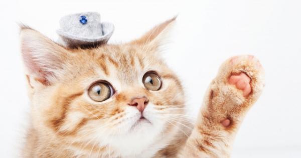 ネコの面白い写真・7選!愛嬌があって可愛らしいネコたち。