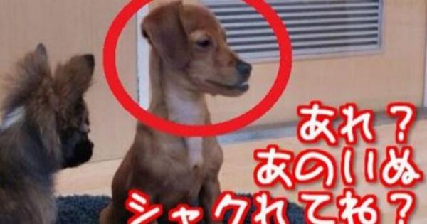#動物【爆笑注意】SNSで見つけた、おもしろ動物画像特集!