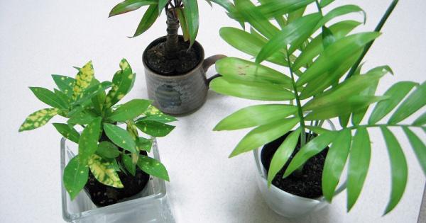 100均の観葉植物!ちょっと工夫するだけでオシャレに使えそう!