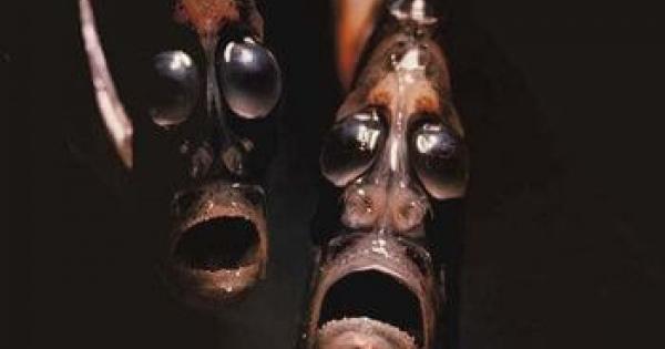 【Deep Sea Creatures】