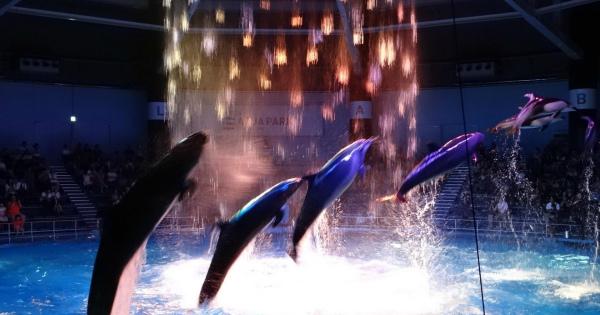 おすすめのお出かけスポット!「アクアパーク品川」水族館の常識を覆すエンタメ施設!
