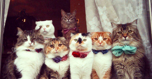 几帳面すぎる「並ぶ猫達!」お行儀が良すぎるニャンコはかわいい!