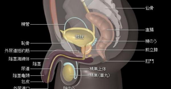 """""""継続は力なり余裕""""月に21回以上の射精が、前立腺がんの予防に!!"""