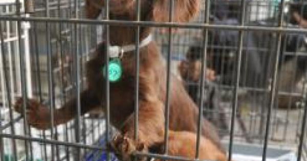 許せない!日本で起こった動物虐待事件