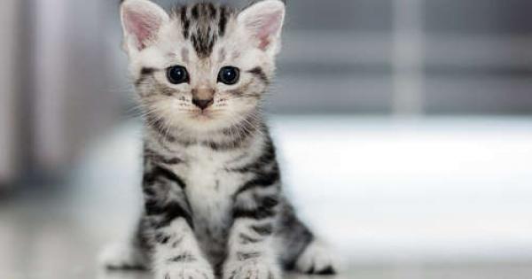 可愛い♡猫ちゃん動画まとめてみました♡PART3