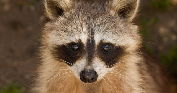 いろいろな生き物たちの『〇〇の恩返し』特集!人間に感謝を伝える健気な動物たち