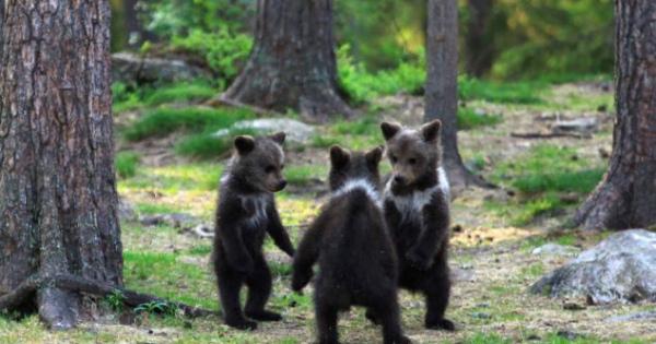 こぐまがダンスしてる!おとぎ話のような野生動物の写真【フィンランド】