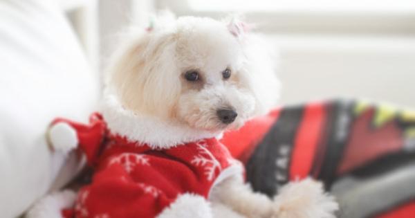 お洒落で可愛いカッコイイ!人気のハンドメイド犬服通販♡厳選おすすめ6選!