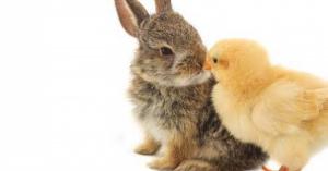 【癒される♡】かわいい動物まとめ