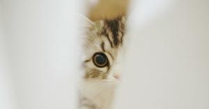 可愛すぎてつらい…猫の体と生態の秘密をこっそり教えます